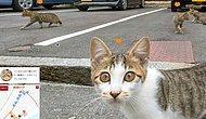 Japonya'yı gezerek kedileri bulun