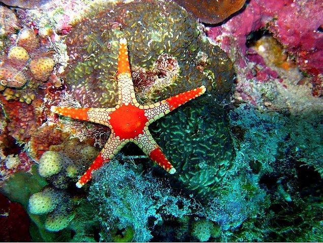 Остров Уилсон (Австралия )