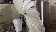Minnoşlukta Psikopatlık Seviyesi: Sosyal Medyanın En Popüler Papağanı Harley