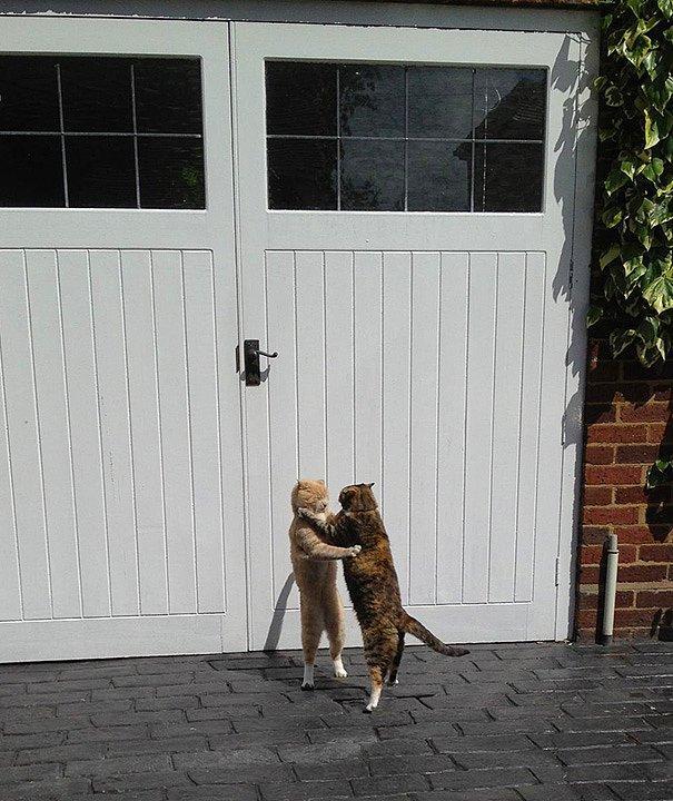 Медленный танец кота и кошки