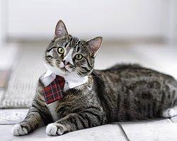 İş Arkadaşınızın Bir Kedi Olduğunun 10 Kanıtı