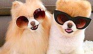 """Sevimli Görünüşleriyle İnsana """"Yerim Lan Sizi"""" Dedirten 13 Köpek Cinsi"""