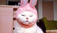 17 Yaşındaki Bu Kedi, Japonya'nın En Tembel İnternet Fenomeni Oldu!
