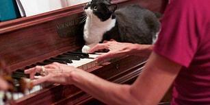 Minicik Patilerine Bakmadan Dünyayı Değiştiren 9 Kedi