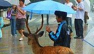 Yağmurlu Havalarda Şemsiyesini Paylaşarak İnsanlık Dersi Veren 17 Güzel İnsan