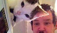 'Böyle Zamanlama Olmaz Yahu' Dedirten 15 Kedi Fotoğrafı