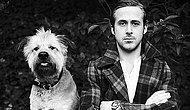 Ryan Gosling ve Köpeği George'un Muhteşem Hayatını Anlatan 25 Kare