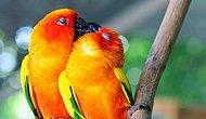 Aşkın Sürekli Çevremizde Olduğunu Gösteren 15 Heyecan Verici Fotoğraf
