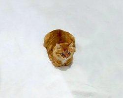Sevimli Kedi Fotoğrafının Üzerine Yapılmış Birbirinden Harika 24 Çizim