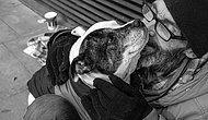 Köpeklerin Sevgilerini Paylaşırken Paraya ve Statüye Bakmadığını İspatlayan 21 Fotoğraf