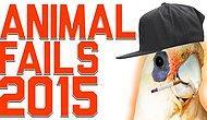 2015'in En Saçma ve En Komik Hayvan Başarısızlıkları
