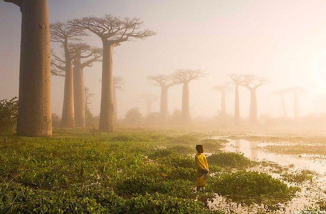 5. Madagascar