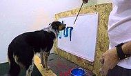 Yeteneği ile Herkesi Şaşırtan Fırça ile Adını Tabloya Yazabilen Köpek