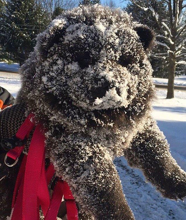 Щенок чау-чау и его первая зима.