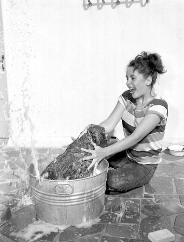 9. Elizabeth Taylor bir köpeği yıkarken.