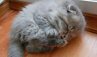 Kedilerin Profesyonel Uykucu Olduğunu Kanıtlayan 22 Mıncırılası Derecede Tatlı Kedi