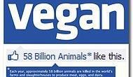 Vegan Olmayı Ciddi Ciddi Düşündüren 10 Sebep