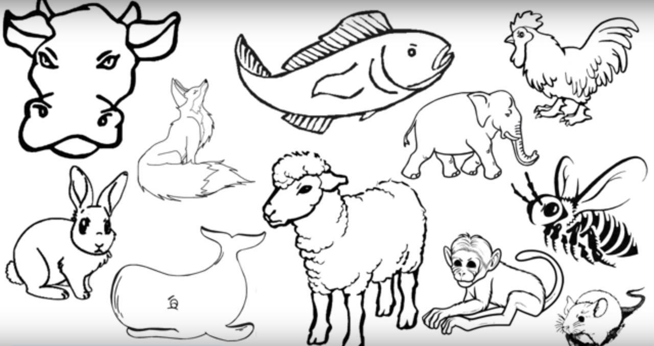 Hayvanlara Eziyet Görüntüleri Paylaşmadan Önce Düşünün
