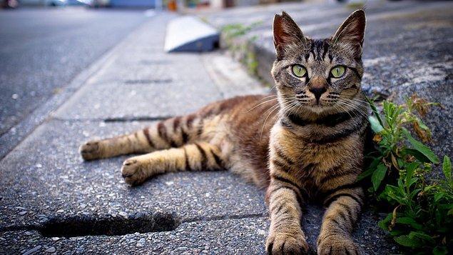 Ortalama bir kedinin ömrü 16 sene. Sokakta ise en fazla iki ya da üç yıl yaşayabiliyorlar.