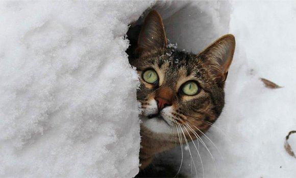 Soğuk ve karlı havaları atlatamıyorlar çoğu ölüyor. Esasında dokuz canları yok, yarım canları var.
