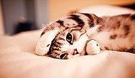 Gün Gün Saat Saat Bir Haftamızın Kedilerle Tasvirine Bayılacaksınız!
