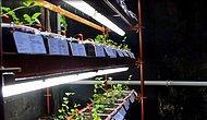 İstanbul'da Yepyeni Bir Restoran Algısı: 'Ek Biç Ye İç' ile Restoranda Tarım