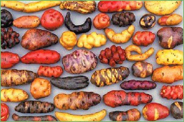 Yabani Patates