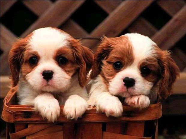 Dünyalar tatlısı bir yavru köpek!