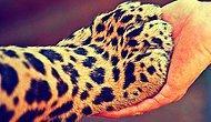 Gerçek Bir Hayvansever Dostunuz Olmasının Size Kazandıracağı 18 Güzel Özellik