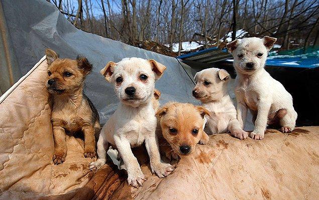 Sokaklarda başıboş gezen köpekleri koruması altına alan yaşlı kadın, bugüne kadar yüzlerce köpeğin bakımını üstlenmiş.