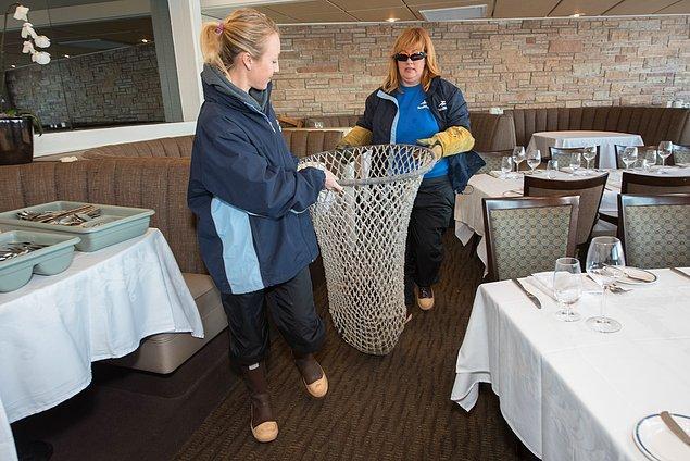 Restoran çalışanları kendisini gördükten sonra aynı şehirde bulunan dünyaca ünlü su parkı Sea World'ün görevlilerine haber vermişler.