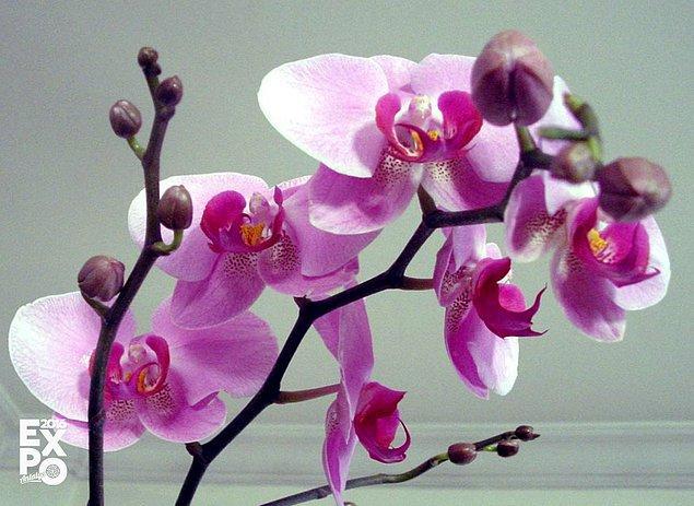 4. Kış aylarının milli içeceği sahlep Orkide bitkisinden elde edilmektedir.