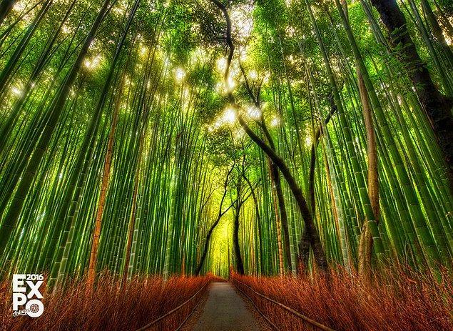7. Bambular iki yılda bir sadece bir kere çiçek açar ve tüm çiçekleri aynı anda açılır.