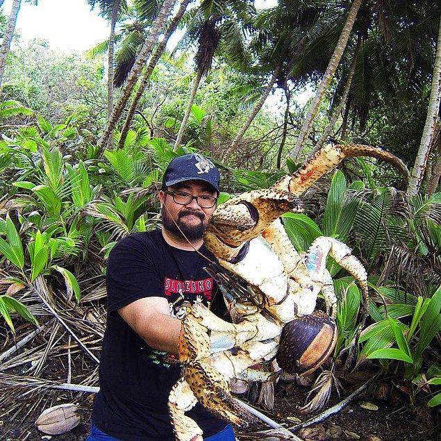 Geçtiğimiz günlerde ise Mark Pierrot adında çılgın bir turist Hint Okyanusu'ndaki Christmas Adası'nda bu devasa yengeçlerden biriyle karşılaştı.