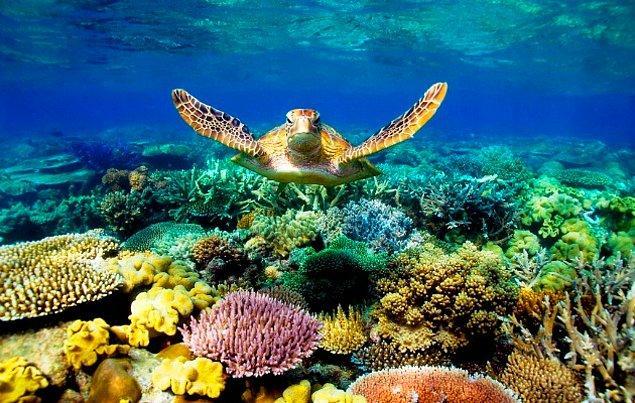 6. Büyük Bariyer Resifi / Avustralya