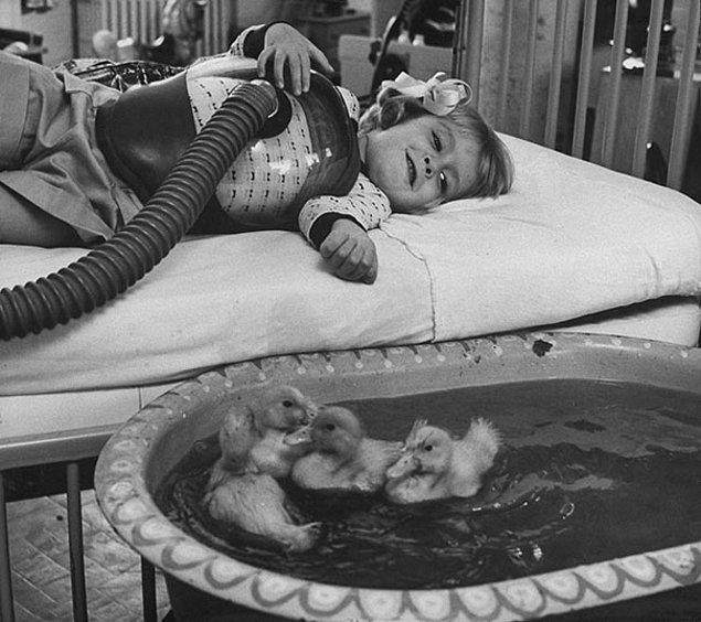 4. Tıbbi tedavinin bir parçası olarak kullanılan hayvanlar, 1956