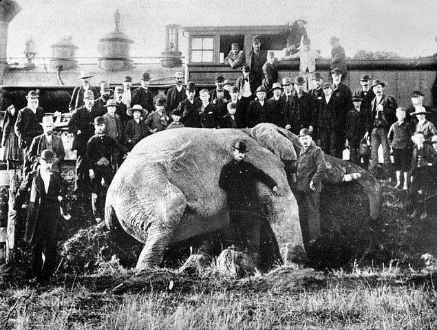 5. Trenin çarpması sonucu ölmüş bir filin etrafında poz veren insanlar, 15 Eylül 1885