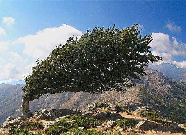 20. Rüzgâra direnen bir ağaç