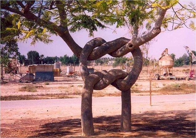 Как так срослись деревья?!