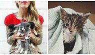 Dünyaya Gözlerini Yeni Açan Kedilerin İnsan Annesi: Hannah Shaw