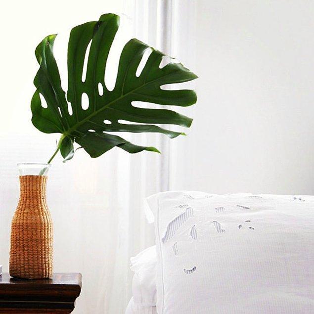 Купите/найдите крупную ветку, лист растения или павлинье перо.