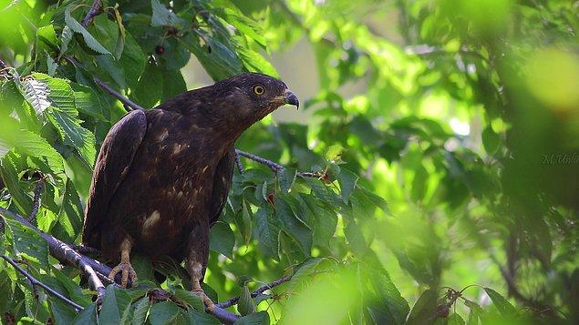 8. Göç eden kuşların konacağı yuvaları