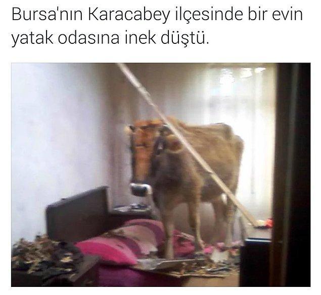 1. Bursa