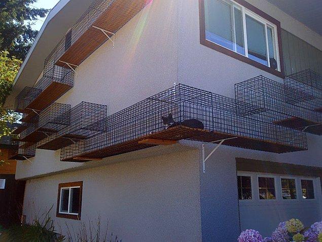 25. Evin dışındaki kedi yolu