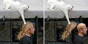 Dünya Kediler Gününüz Kutlu Olsun! Espri Anlayışı Arşa Yükselmiş Olan Trollük Peşindeki 21 Kedi