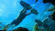 Su Altında Adeta Uçuyorlar: Yazın Gelmesini İple Çektiren Muhteşem Görüntüler