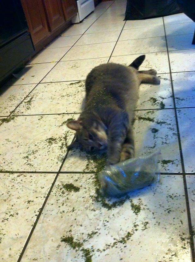 3. Minnacık kediler bu otu kokluyor, yalıyor, yiyor ve...