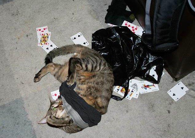 6. Bir kediye hiç yakışmayacak hallere düşebiliyor...
