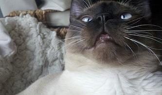 Ev Hayvanlarımızı Tehdit Eden Yeni Bağımlılık! Kedi Otuyla Kendinden Geçen 21 Müptela