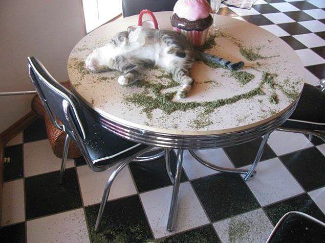 18. Lütfen evlerimize bu tür uyuşturucuları sokmayalım.